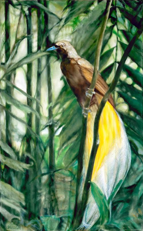 Bird Of Lost Paradise 1