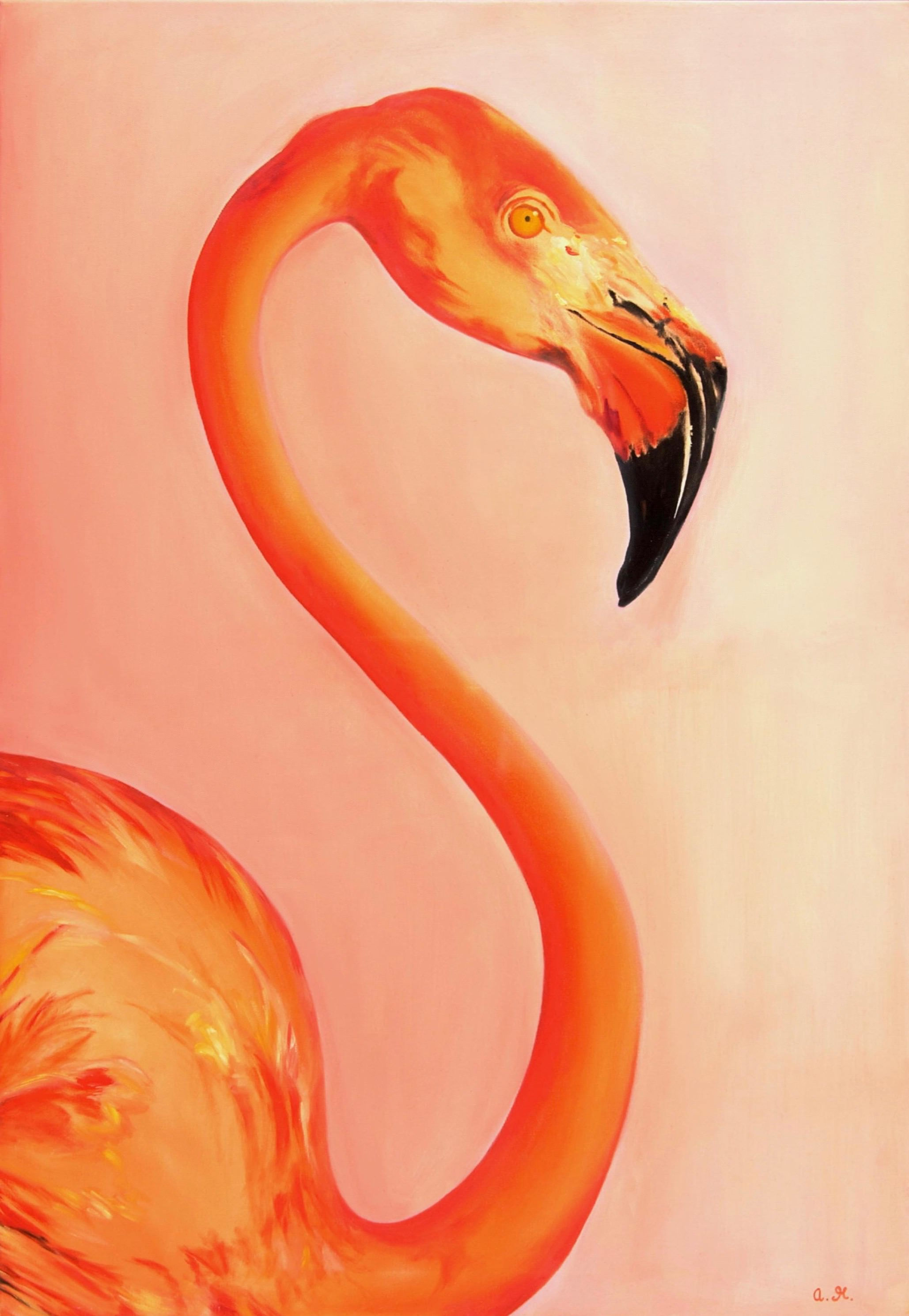 Flamingo Für Ama